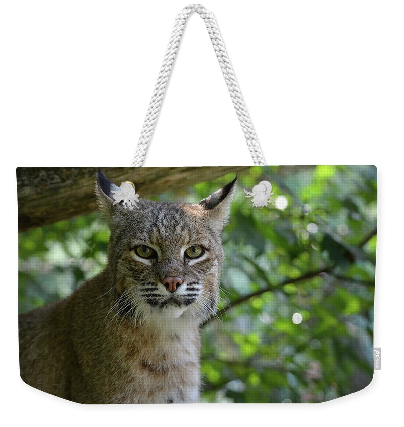 Wildlife Weekender Tote Bag featuring the photograph Bobcat Staring Contest by Jesse MacDonald