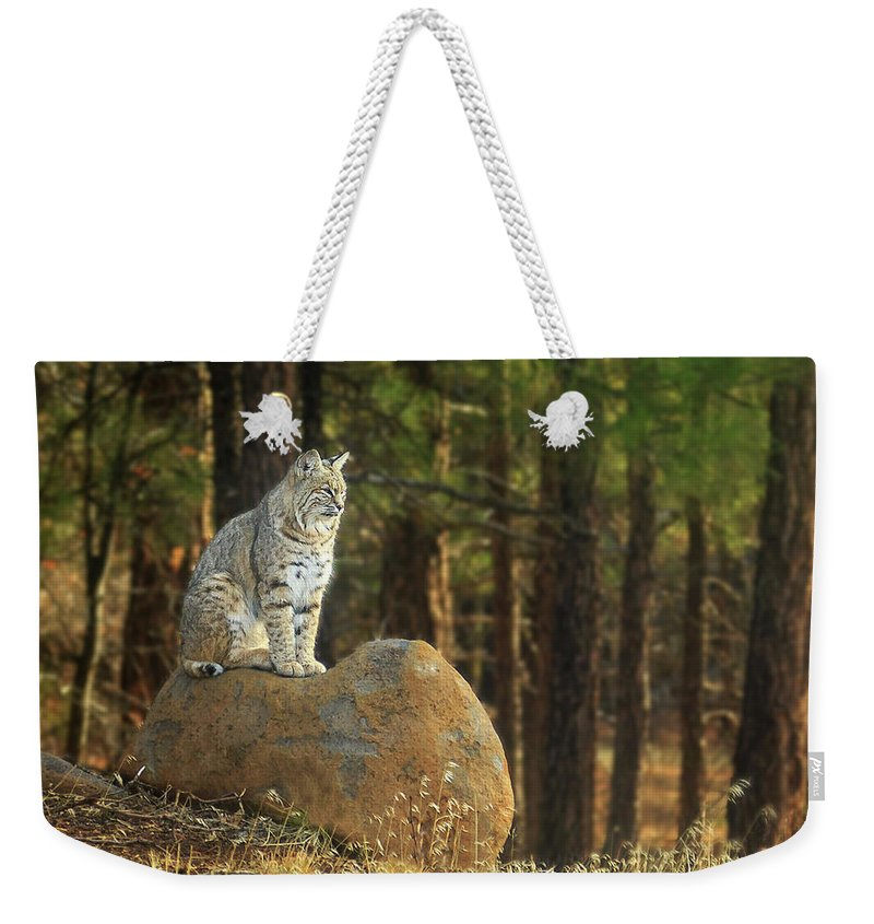 Bobcat Weekender Tote Bag featuring the photograph Bobcat Thoughts by James Eddy