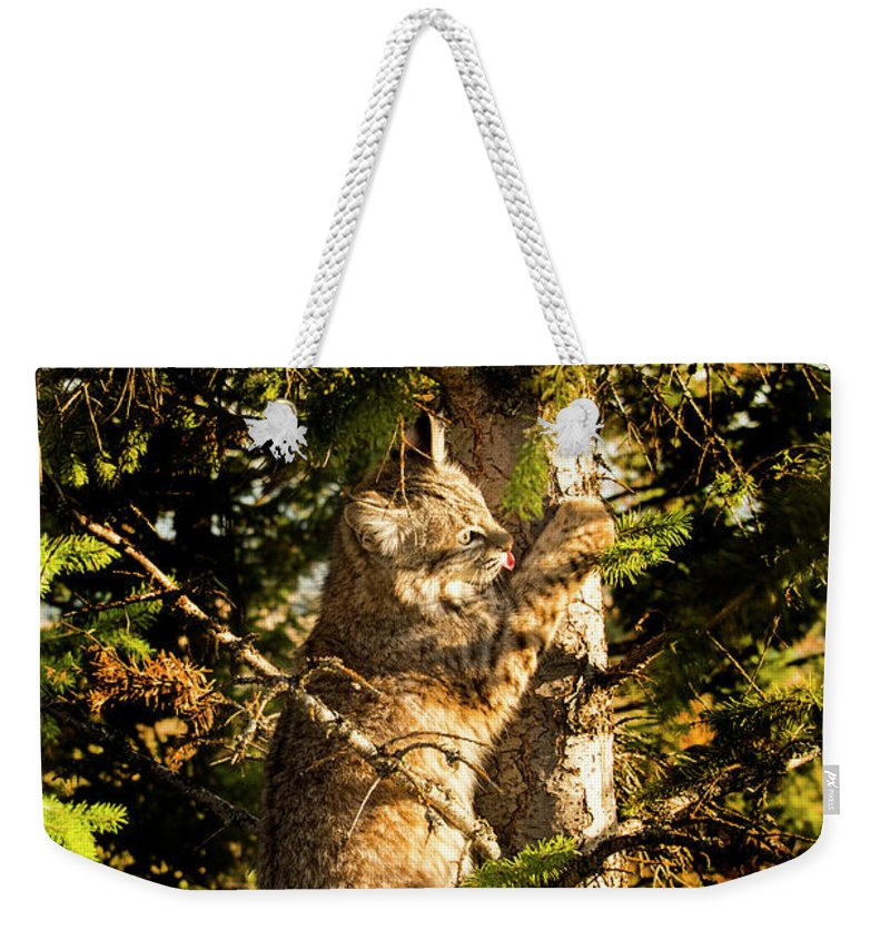 Bobcat Weekender Tote Bag featuring the photograph Bobcat up a tree by Roy Nierdieck