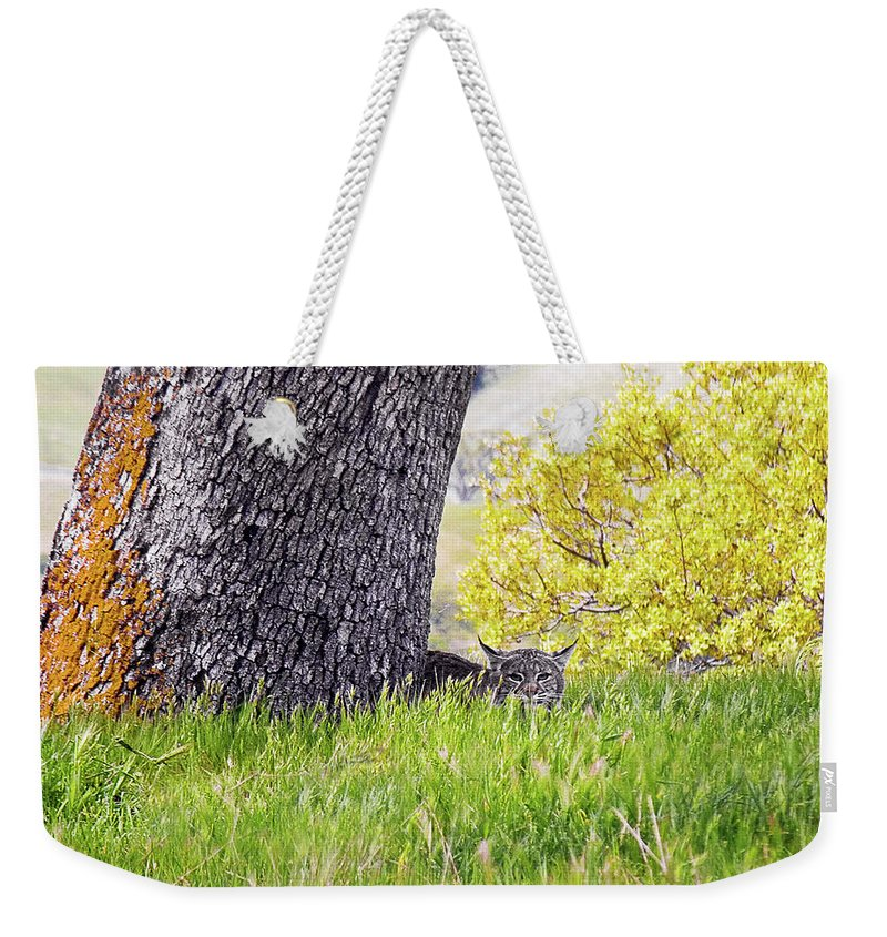 Landscape Weekender Tote Bag featuring the photograph Bobcat Watch by Karen W Meyer