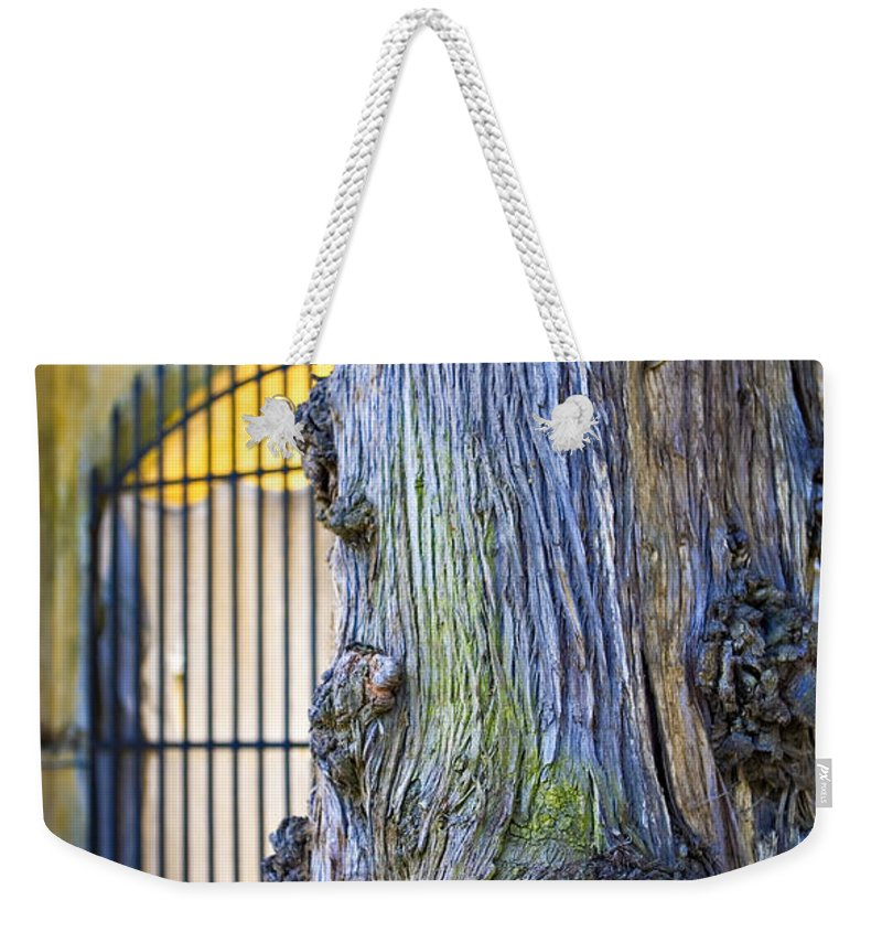 Boboli Weekender Tote Bag featuring the photograph Boboli Garden Ancient Tree by Marilyn Hunt