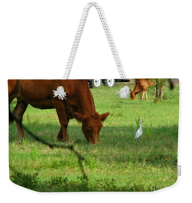 Cows Weekender Tote Bag featuring the photograph Bodyguard by Greg Patzer