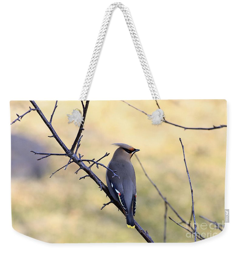 Waxwing Weekender Tote Bag featuring the photograph Bohemian Cedar Waxwing In Spring by Deborah Benoit