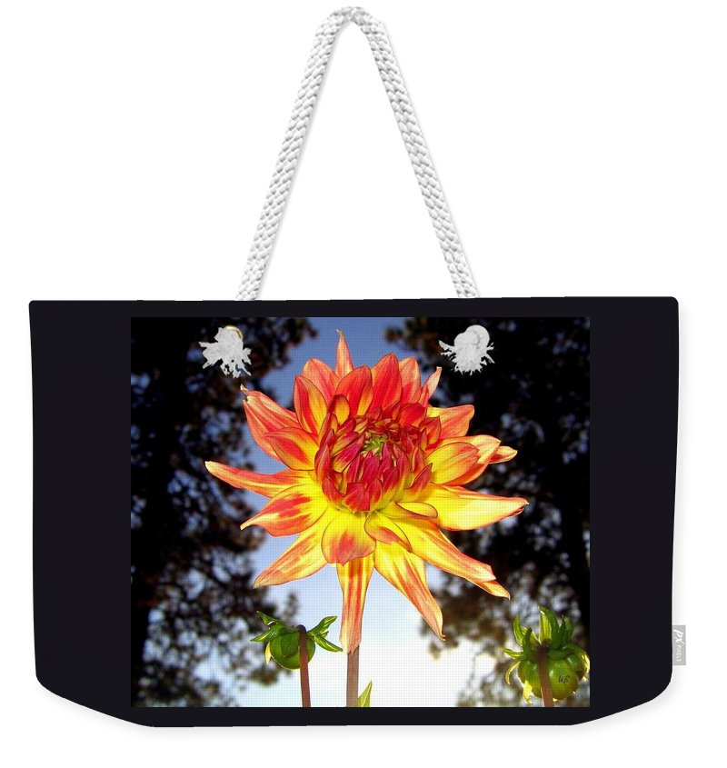 Dahlia Weekender Tote Bag featuring the photograph Bold And Beautiful by Will Borden