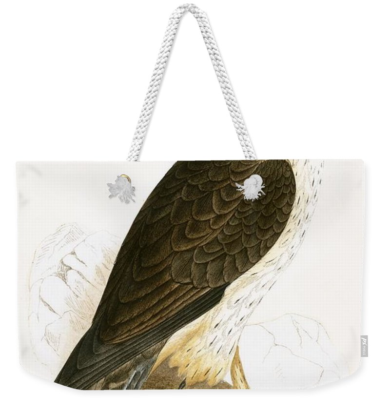 Ornithology Weekender Tote Bag featuring the painting Bonelli's Eagle by English School