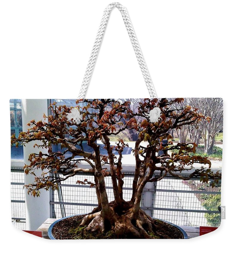 Bonsai Photo Weekender Tote Bag featuring the photograph Bonsia Tree Garden by Lord Frederick Lyle Morris