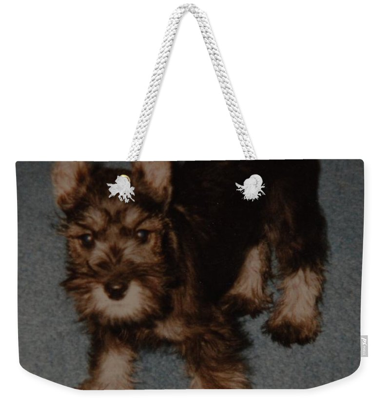 Dog Weekender Tote Bag featuring the photograph Boo Boo by Rob Hans