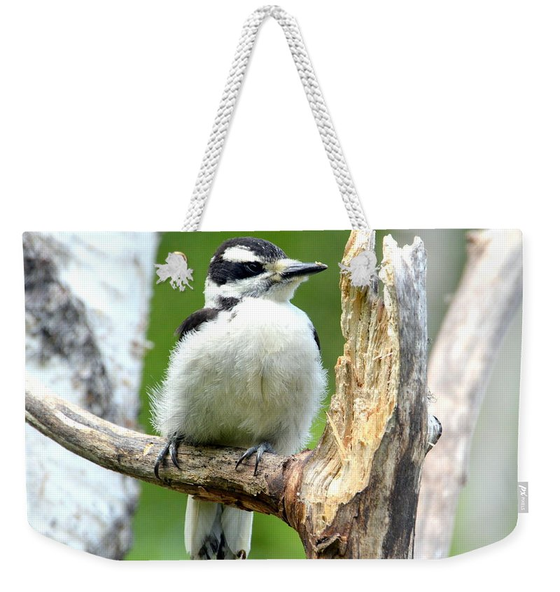 Woodpecker Weekender Tote Bag featuring the photograph Boring Wood by Sherry McKellar