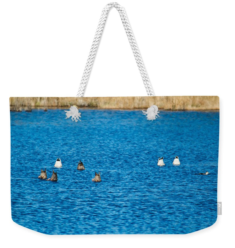 Birds Weekender Tote Bag featuring the photograph Bottoms Up by Michael Goodin