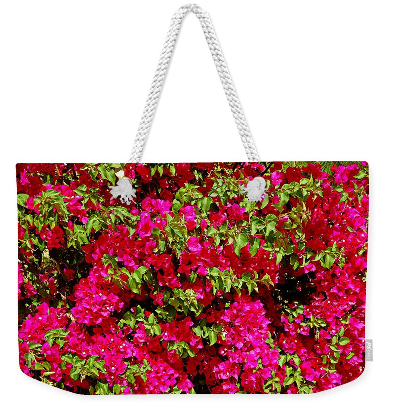 Bougainvillea Weekender Tote Bag featuring the photograph Bougainvillea And Foliage by Robert Meyers-Lussier