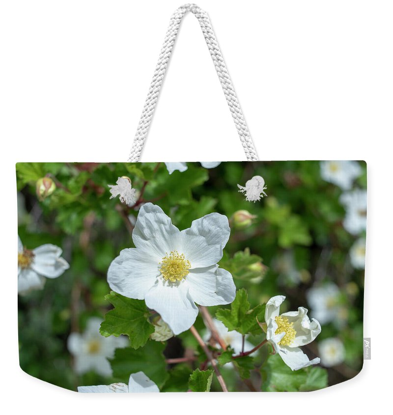 Colorado Weekender Tote Bag featuring the photograph Boulder Raspberry by Brian Stricker