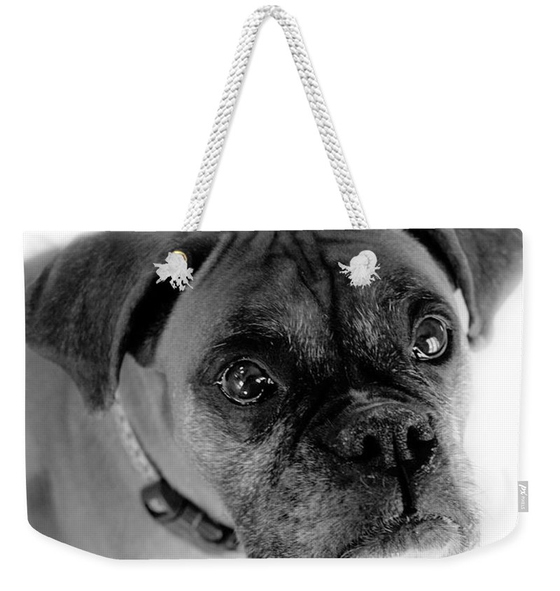 Boxer Weekender Tote Bag featuring the photograph Boxer Dog by Marilyn Hunt