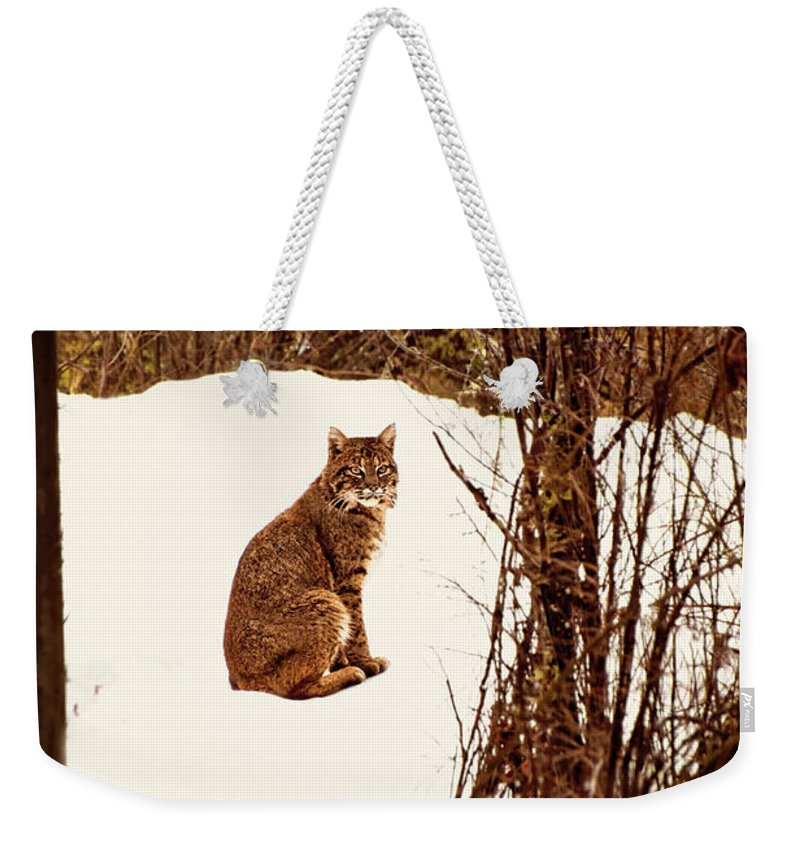 Bobcat Weekender Tote Bag featuring the photograph Bobcat In Snow by Peggy Collins