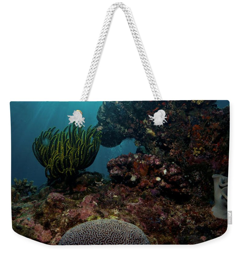 Solomons Weekender Tote Bag featuring the photograph Brains And Crinoids by Mumbles and Grumbles