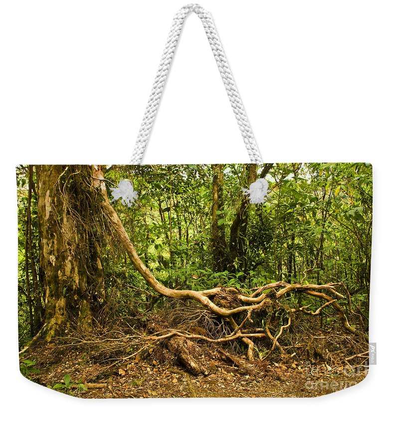 Tree Weekender Tote Bag featuring the photograph Branching Out In Costa Rica by Madeline Ellis