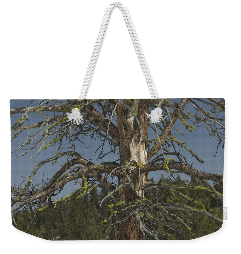 Tree Weekender Tote Bag featuring the photograph Branching Out by Sara Stevenson