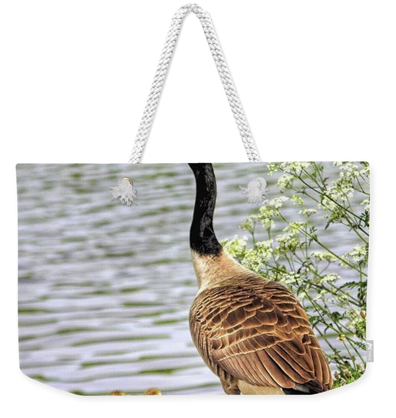 Geese Weekender Tote Bag featuring the photograph Branta Canadensis  #canadagoose by John Edwards