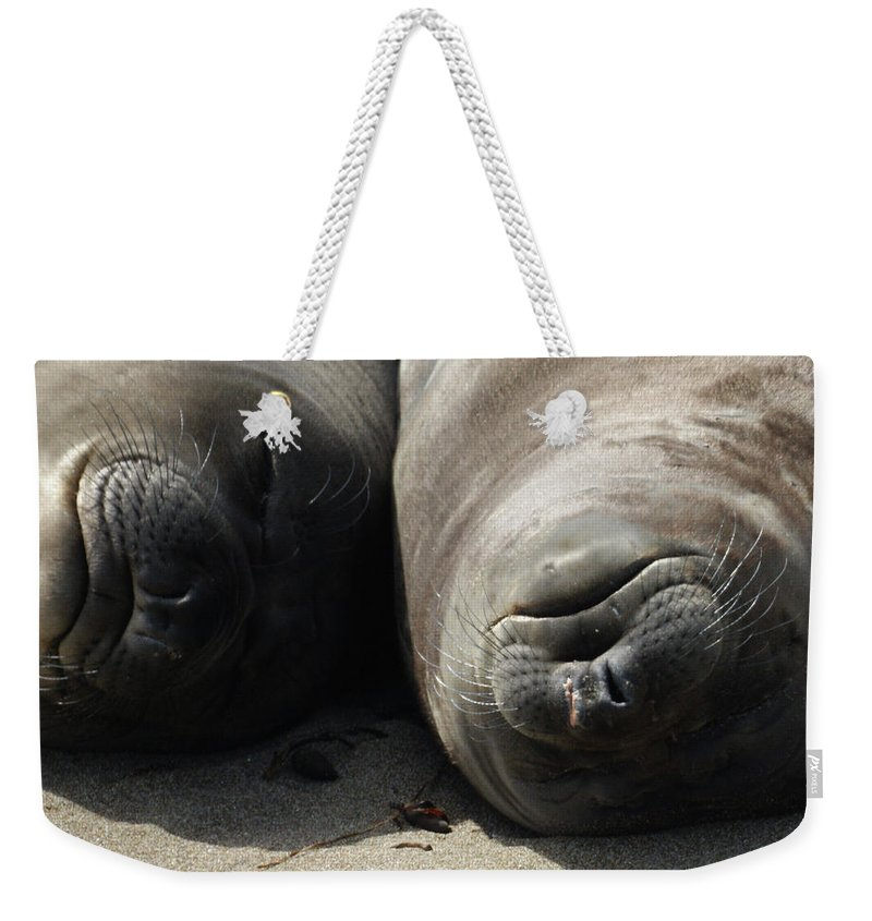 Elephant Seals Weekender Tote Bag featuring the photograph Break Time by Ernie Echols