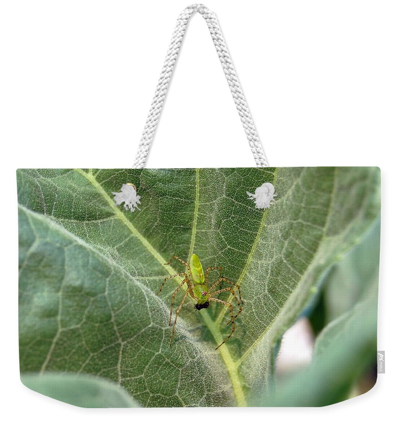 Spider Weekender Tote Bag featuring the photograph Breakfast by Robert Meanor