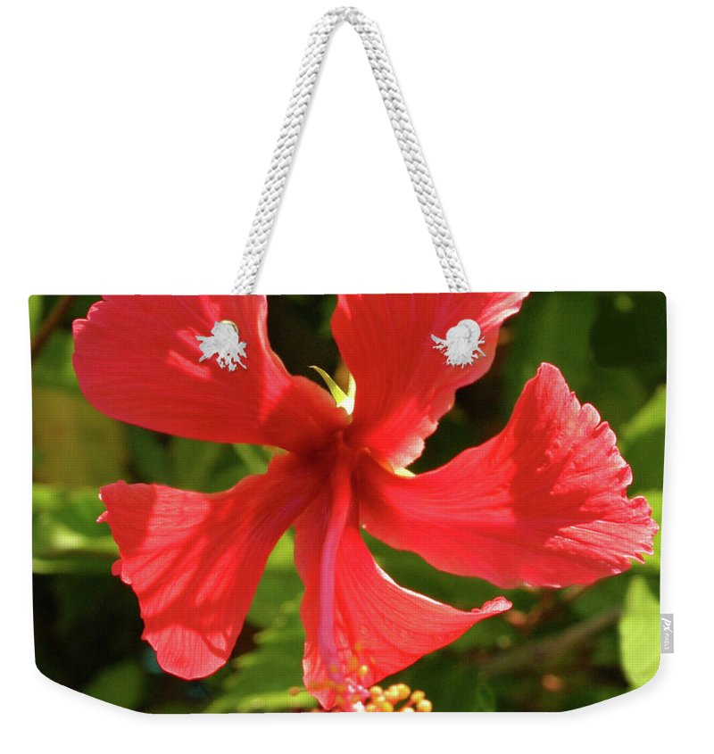 Flowers Weekender Tote Bag featuring the photograph Bright And Sunny by Bruce Gaynor
