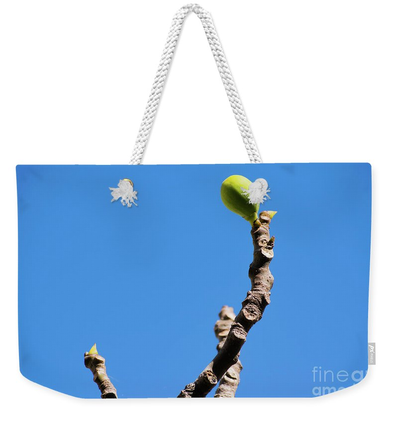 Blue Weekender Tote Bag featuring the photograph Bright Fig Against The Sky. by Cesar Padilla
