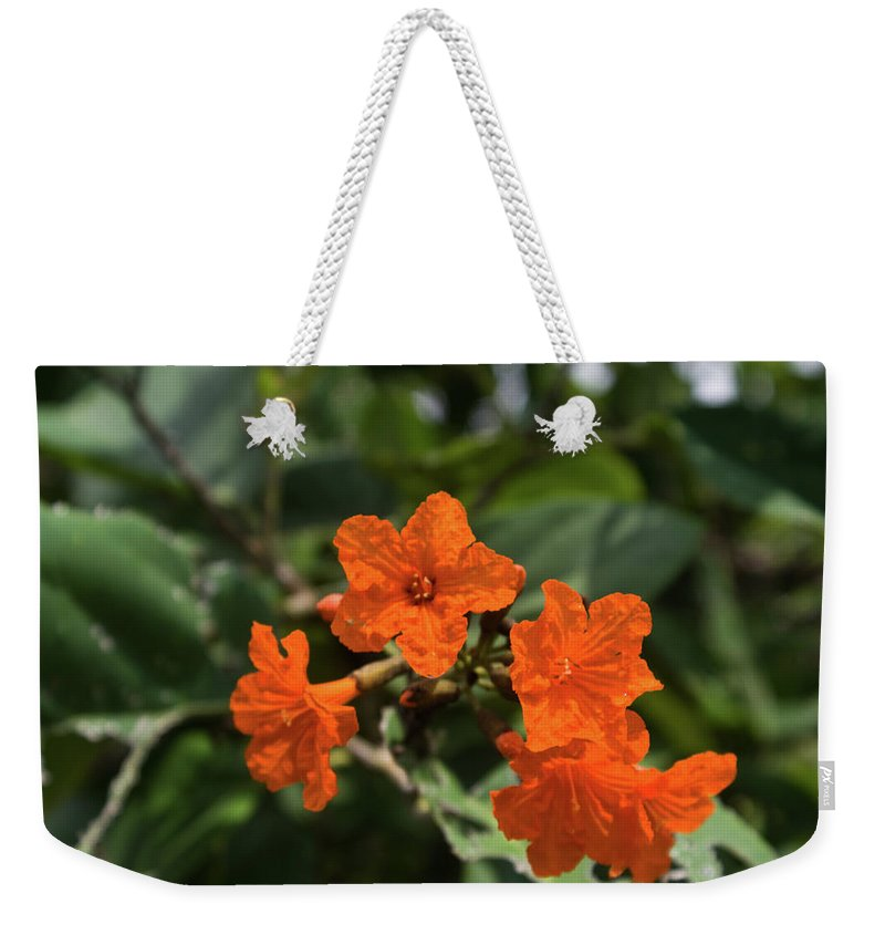 Brilliant Weekender Tote Bag featuring the photograph Brilliant Orange Tropical Flower by Douglas Barnett
