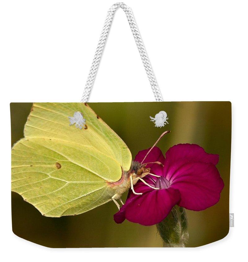 Lehtokukka Weekender Tote Bag featuring the photograph Brimstone 1 by Jouko Lehto