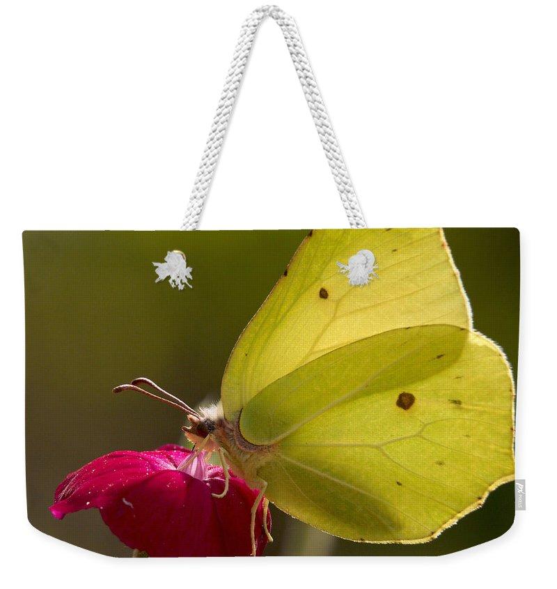 Lehtokukka Weekender Tote Bag featuring the photograph Brimstone 2 by Jouko Lehto