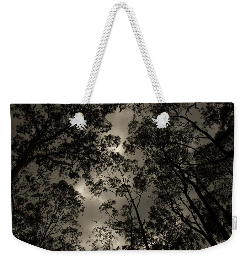 Black And White Weekender Tote Bag featuring the photograph Brisbane Rain Forest by Lisa Ross