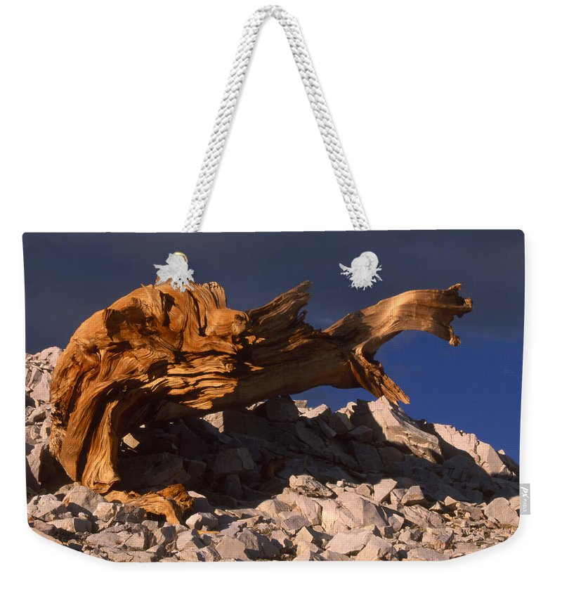 Bristlecone Pine Weekender Tote Bag featuring the photograph Bristlecone Pine - White Mountains by Soli Deo Gloria Wilderness And Wildlife Photography