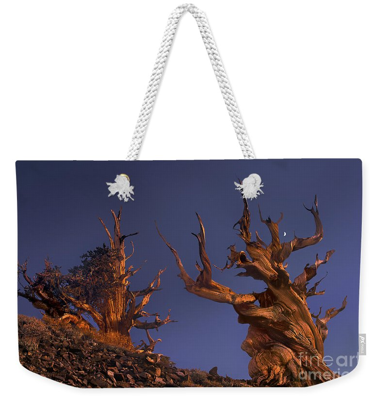 Bristlecone Pine Weekender Tote Bag featuring the photograph Bristlecone Pines At Sunset With A Rising Moon by Dave Welling