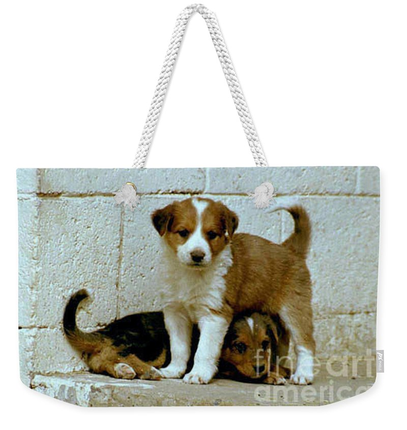 Puppies Weekender Tote Bag featuring the photograph Brothers by Kathy McClure