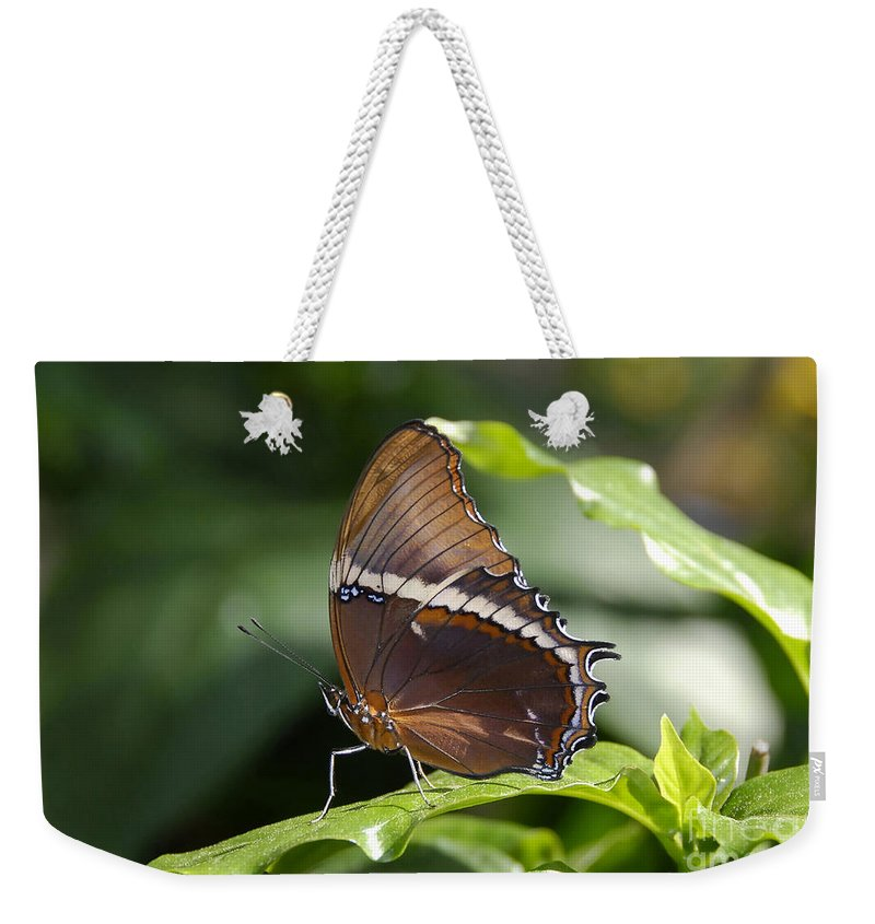 Butterfly Weekender Tote Bag featuring the photograph Brown Beauty by David Lee Thompson
