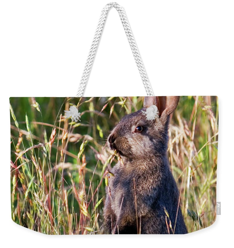 Rabbit Weekender Tote Bag featuring the photograph Brown Bunny by Randall Ingalls