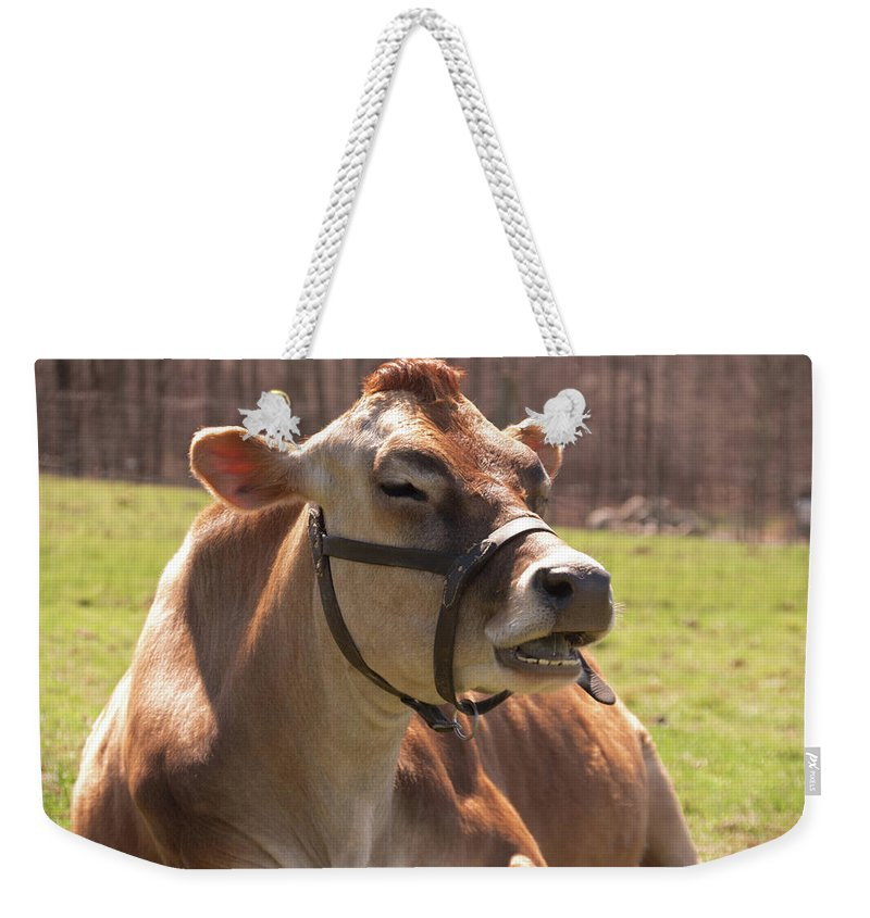 Cow Weekender Tote Bag featuring the photograph Brown Cow Chewing by Diane Schuler