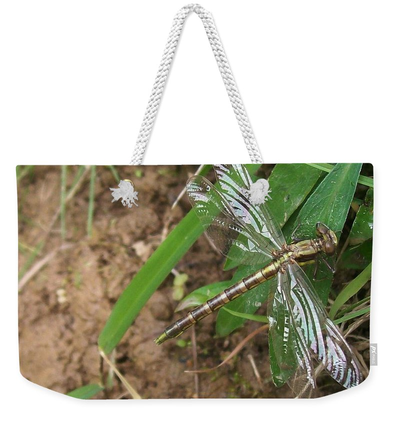 Dragonfly Weekender Tote Bag featuring the photograph Brown Dragon by Sara Raber