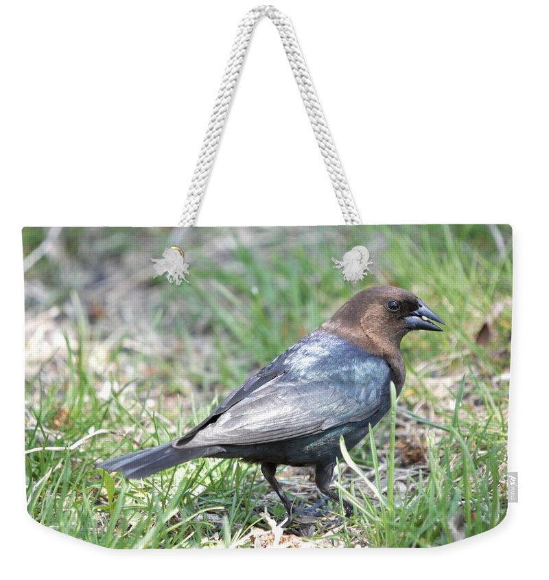 Animal Weekender Tote Bag featuring the photograph Brown-headed Cowbird 2 by Bonfire Photography