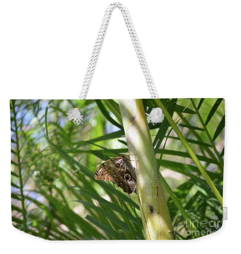 Blue Morpho Weekender Tote Bag featuring the photograph Brown Morpho Butterfly Resting On A Sunny Tree by DejaVu Designs