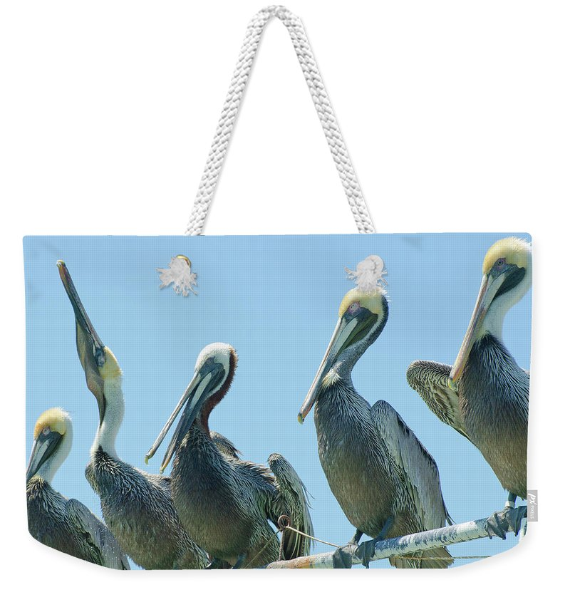 Weekender Tote Bag featuring the photograph Brown Pelican 4 by Mike Goldstein