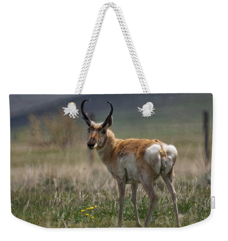 Buck Weekender Tote Bag featuring the photograph Buck Antelope by Heather Coen