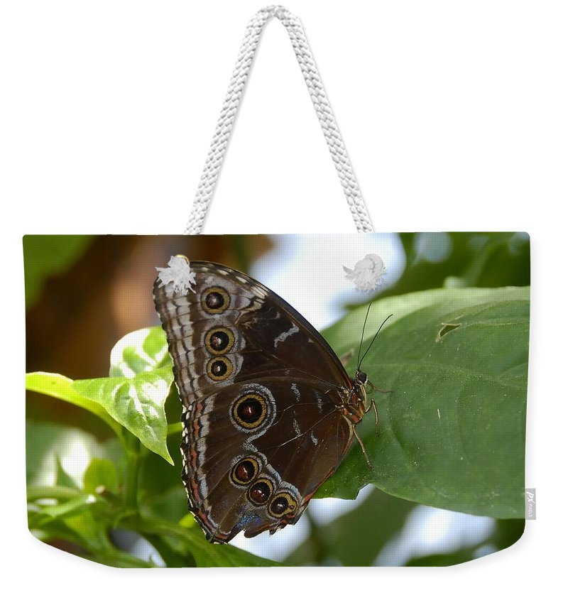 Photography Weekender Tote Bag featuring the photograph Buckeye Butterfly by David Lee Thompson