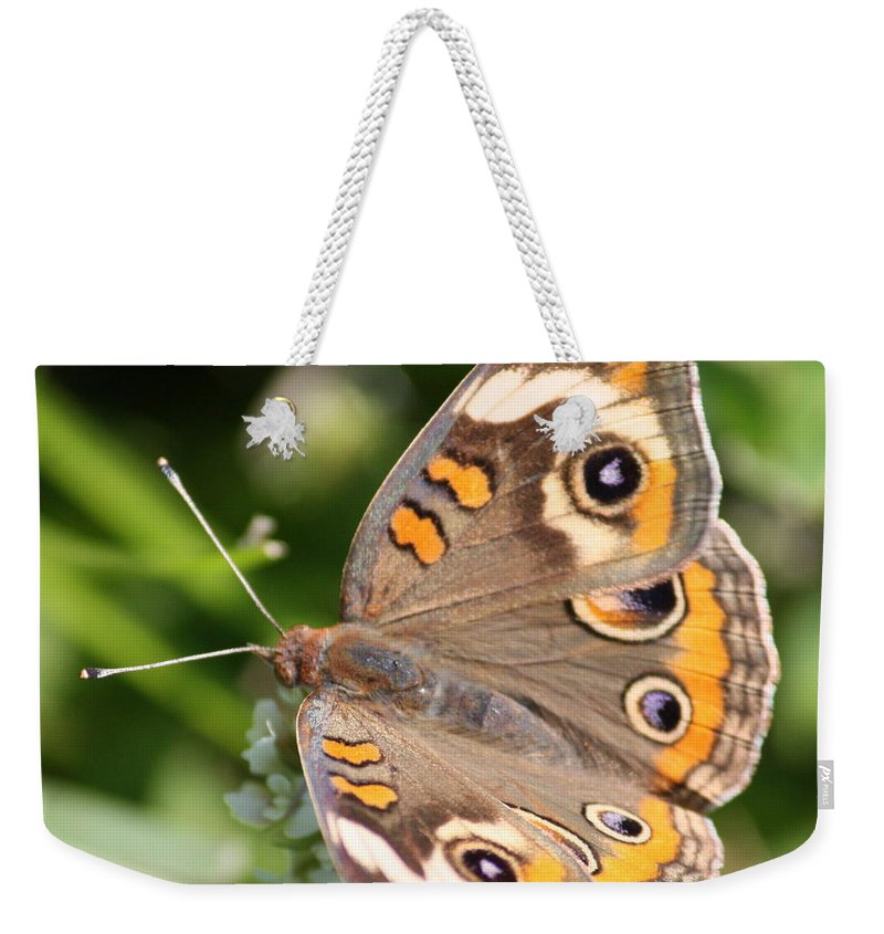 Buckeye Weekender Tote Bag featuring the photograph Buckeye Butterfly Square by Carol Groenen