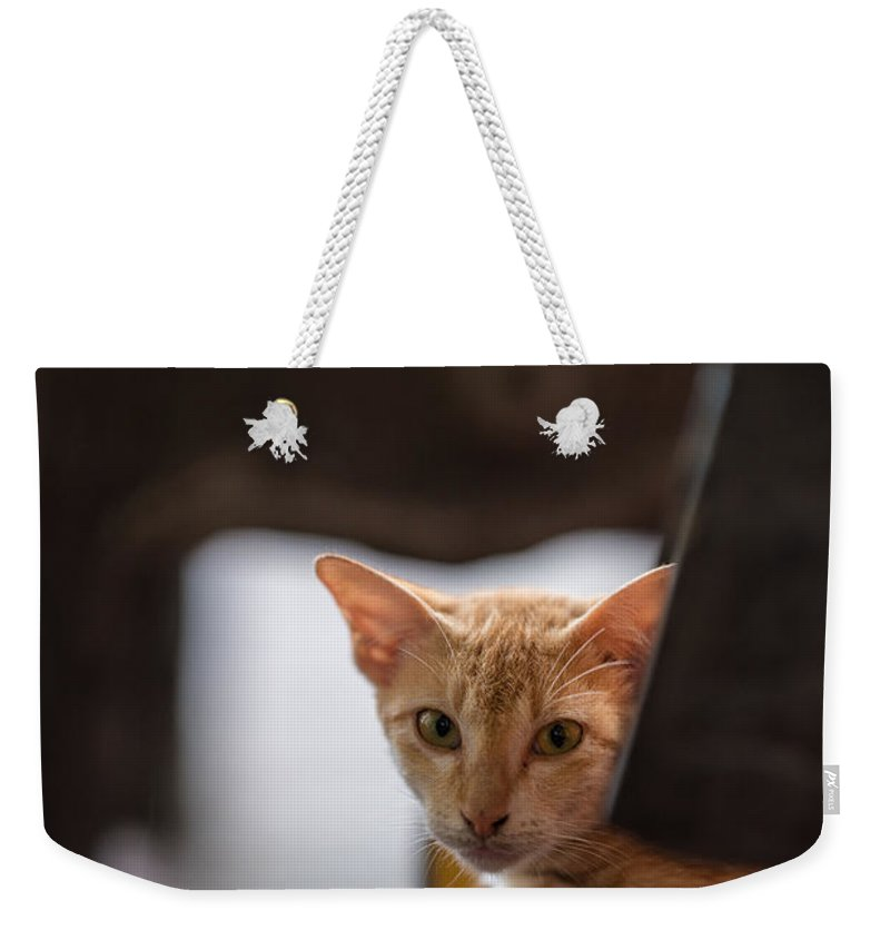 Cat Weekender Tote Bag featuring the photograph Buddhist Temple Cat by Mike Reid