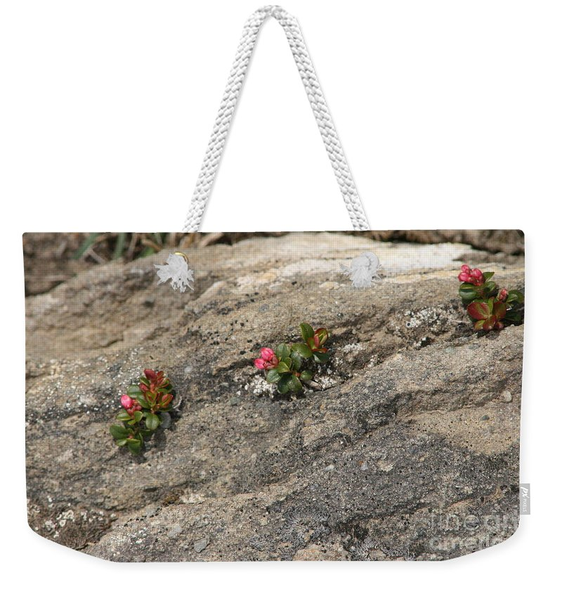 Nature Weekender Tote Bag featuring the photograph Buds Of Beauty Within Harshness by Mary Mikawoz