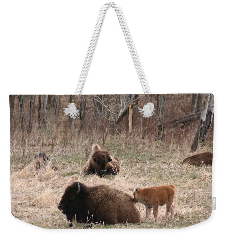 Bison Buffalo Calf Baby Animals Nature Love Native Weekender Tote Bag featuring the photograph Buffalo And Calf by Andrea Lawrence