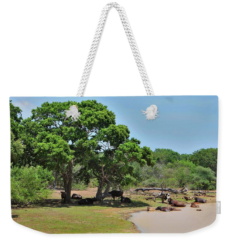 Landscape Weekender Tote Bag featuring the photograph Buffalo At Hambantota by Mark Victors