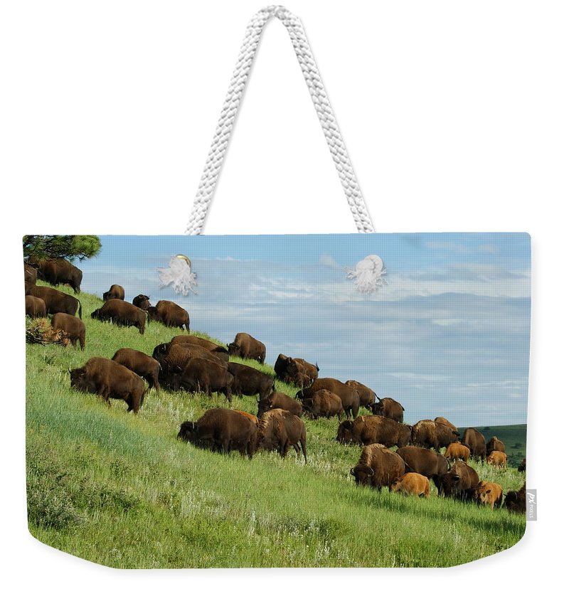 Animals Weekender Tote Bag featuring the photograph Buffalo Herd by Ernie Echols