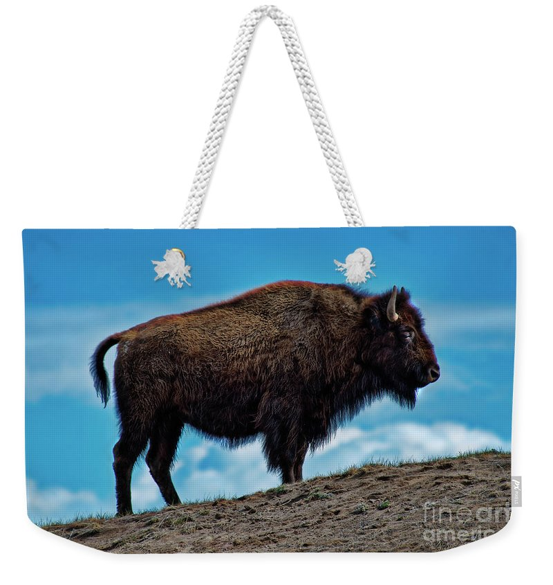Buffalo Weekender Tote Bag featuring the photograph Buffalo In Profile by David Arment