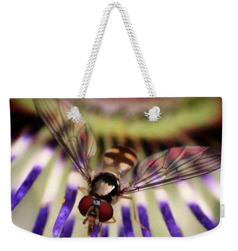 Bug Weekender Tote Bag featuring the photograph Bug Eyed by Martin Newman