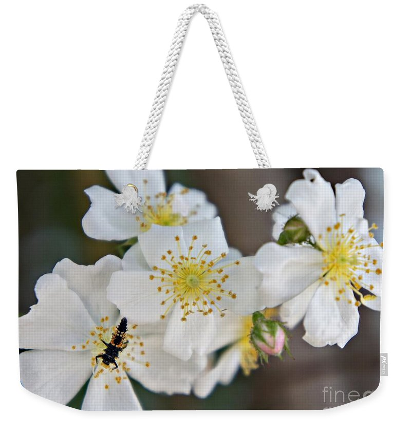 Bug Weekender Tote Bag featuring the photograph Bugaboo Apple Blossoms by Lilliana Mendez
